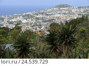 Купить «Portugal, island Madeira, Funchal, town view,», фото № 24539729, снято 15 июня 2009 г. (c) mauritius images / Фотобанк Лори