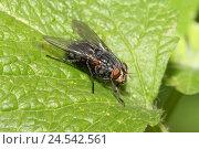 Купить «Big room fly, leaves,», фото № 24542561, снято 23 сентября 2008 г. (c) mauritius images / Фотобанк Лори