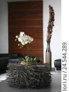 Купить «Orchid, flower, bloom, white, living room, ambience, phalaenopsis, flowers,», фото № 24544289, снято 20 сентября 2018 г. (c) mauritius images / Фотобанк Лори