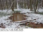 Ручей в зимнем лесу, фото № 24545025, снято 28 декабря 2015 г. (c) александр жарников / Фотобанк Лори