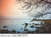 Купить «Leafless bare tree silhouette. Still lake coast», фото № 24549073, снято 7 ноября 2015 г. (c) EugeneSergeev / Фотобанк Лори