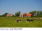 Купить «Germany, Schleswig - Holstein, north frieze country, island Pellworm, pasture, cows,», фото № 24554581, снято 29 сентября 2009 г. (c) mauritius images / Фотобанк Лори