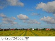Купить «Germany, Schleswig - Holstein, north frieze country, peninsula north beach, Süderhafen, local view, rape fields,», фото № 24555781, снято 29 сентября 2009 г. (c) mauritius images / Фотобанк Лори
