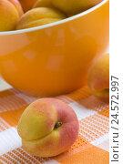 Купить «Bowl, apricots, Prunus armeniaca, fruit, fruits, apricot, stone fruit, rose plants, sour, sweetly, fruity, juicy, ripe, apeetitlich, colour mood, colour...», фото № 24572997, снято 19 августа 2018 г. (c) mauritius images / Фотобанк Лори