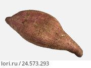Купить «Sweet potato, yam, cut out, nodule, vegetables, root vegetables, nodule winch, useful plant, twining plants, Convolvulaceae, food, tropical, exotic, Asian, studio recording,», фото № 24573293, снято 9 декабря 2010 г. (c) mauritius images / Фотобанк Лори