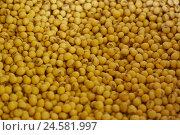 Купить «Soy sowing, close up, semen, sowing, sowing centre punch, soy centre punch, soy beans, yellow, around,», фото № 24581997, снято 6 мая 2008 г. (c) mauritius images / Фотобанк Лори