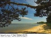 Купить «Summer Idyll, Kurisches lagoon, Juodkrante, national park health resort broad bay bar, Lithuania,», фото № 24584021, снято 17 июля 2018 г. (c) mauritius images / Фотобанк Лори