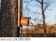 Птица возле домика на дереве. Стоковое фото, фотограф Владимир Иванов / Фотобанк Лори