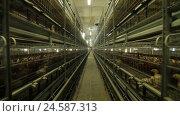 Купить «Chicken Farm poultry production», видеоролик № 24587313, снято 30 сентября 2016 г. (c) Илья Насакин / Фотобанк Лори
