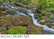 Горный ручей. Стоковое фото, фотограф Дмитрий Голуб / Фотобанк Лори