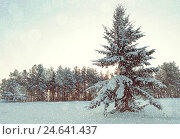 Купить «Winter landscape - snowy fir tree in the winter forest under falling snow in cold weather», фото № 24641437, снято 27 ноября 2010 г. (c) Зезелина Марина / Фотобанк Лори