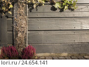 Купить «wooden fence, climbing plant, wild wine, cobblestones, heathers, heather, strain, protected, grid, wine tendrils, vines, leaves, planting grass, outside,», фото № 24654141, снято 26 января 2009 г. (c) mauritius images / Фотобанк Лори