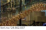 Купить «Production Process of Chickens in a Slaughterhouse», видеоролик № 24662037, снято 30 сентября 2016 г. (c) Илья Насакин / Фотобанк Лори