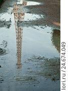 Купить «Champ de Mars, puddle, reflection, Eiffel Tower, Paris, France,», фото № 24674049, снято 18 июля 2019 г. (c) mauritius images / Фотобанк Лори