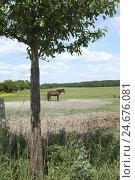 Купить «Horse on the pasture, Uckermark, Germany,», фото № 24676081, снято 16 августа 2018 г. (c) mauritius images / Фотобанк Лори