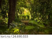 Лес. Стоковое фото, фотограф Sawat / Фотобанк Лори