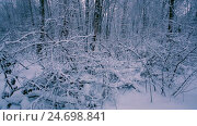 Купить «Snowy branches in forest.», видеоролик № 24698841, снято 14 декабря 2016 г. (c) Андрей Армягов / Фотобанк Лори