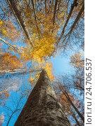 Кроны деревьев в осеннем лесу. Стоковое фото, фотограф Сергей Орлов / Фотобанк Лори