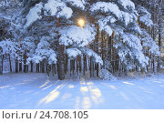 Зимнее утро в лесу, фото № 24708105, снято 15 декабря 2016 г. (c) александр жарников / Фотобанк Лори