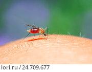 Купить «Противное насекомое комар сидит на коже и пьет кровь», фото № 24709677, снято 22 августа 2016 г. (c) Бачкова Наталья / Фотобанк Лори