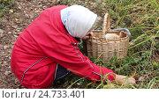 Купить «Женщина нашла белые грибы», видеоролик № 24733401, снято 20 декабря 2016 г. (c) Александр Романов / Фотобанк Лори