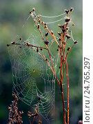 Купить «Паутинка в лесу», фото № 24765297, снято 9 марта 2014 г. (c) Игорь Потапов / Фотобанк Лори