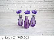 Фиолетовые цветки в вазах. Стоковое фото, фотограф Ольга Еремина / Фотобанк Лори