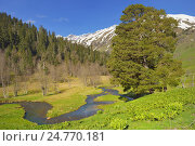 Купить «Весна в горах», фото № 24770181, снято 21 мая 2016 г. (c) александр жарников / Фотобанк Лори