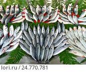 Купить «Скумбрия, луфарь и дорада на прилавке рыбного магазина. Стамбул, Турция.», фото № 24770781, снято 20 декабря 2014 г. (c) Истомина Елена / Фотобанк Лори