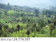 Купить «Плантации чая на горных склонах, Haputale, Шри Ланка», фото № 24774597, снято 29 ноября 2016 г. (c) Валерий Шанин / Фотобанк Лори