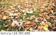 Купить «fallen autumn maple leaves on meadow», видеоролик № 24781685, снято 13 октября 2016 г. (c) Syda Productions / Фотобанк Лори