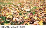 Купить «fallen autumn maple leaves on meadow», видеоролик № 24781689, снято 13 октября 2016 г. (c) Syda Productions / Фотобанк Лори