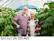Купить «happy senior couple at farm greenhouse», фото № 24785469, снято 25 августа 2016 г. (c) Syda Productions / Фотобанк Лори