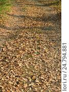 Дорога в лесу по осенним листьям. Стоковое фото, фотограф Галимова Надежда Александровна / Фотобанк Лори