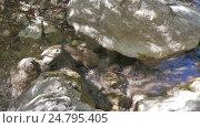 Купить «Creek flowing over the rocks», видеоролик № 24795405, снято 15 июня 2019 г. (c) Константин Мерцалов / Фотобанк Лори