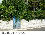 Синяя старая дверь среди зеленых растений. Стоковое фото, фотограф Наталья Корзина / Фотобанк Лори