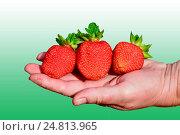 Клубника на руке. Стоковое фото, фотограф Виктор Архипов / Фотобанк Лори