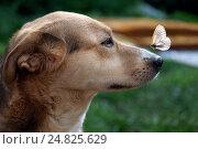 Купить «Бабочка села на нос собаки», фото № 24825629, снято 22 января 2018 г. (c) Ирина Козорог / Фотобанк Лори