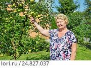 Купить «Пожилая женщина у яблони», фото № 24827037, снято 6 августа 2016 г. (c) Ирина Носова / Фотобанк Лори