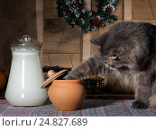 Купить «Jug of milk, a small pot, a pot of delicious food. Gray fluffy cat is looking for food. Christmas wreath, old boards. The cozy kitchen. Cute pet», фото № 24827689, снято 15 июля 2018 г. (c) Ирина Козорог / Фотобанк Лори