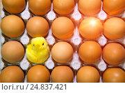 Купить «Toy chicken between eggs in packing», фото № 24837421, снято 20 марта 2016 г. (c) Куликов Константин / Фотобанк Лори