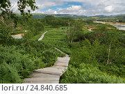 Wooden path in the Uzon Caldera. Kronotsky Nature Reserve (2016 год). Редакционное фото, фотограф Юлия Машкова / Фотобанк Лори