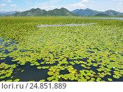 Купить «Скадарское озеро в Черногории летом», фото № 24851889, снято 22 июня 2015 г. (c) Овчинникова Ирина / Фотобанк Лори