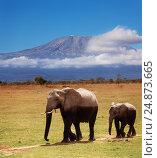 Купить «Adult African elephant with calf covered by mud», фото № 24873665, снято 16 августа 2015 г. (c) Сергей Новиков / Фотобанк Лори