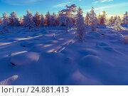 Купить «Winter landscape with forest, trees and sunset», фото № 24881413, снято 13 июля 2020 г. (c) Оксана Владимировна Грачева / Фотобанк Лори