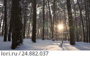 Купить «Vertical panorama of sun streaming through winter forest stock footage video», видеоролик № 24882037, снято 16 января 2017 г. (c) Юлия Машкова / Фотобанк Лори