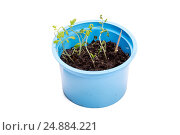 Купить «Зеленые ростки рассады в пластиковой баночке», фото № 24884221, снято 30 марта 2015 г. (c) Евгений Ткачёв / Фотобанк Лори