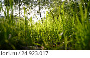 Купить «View of green grass from below», видеоролик № 24923017, снято 9 июня 2016 г. (c) Володина Ольга / Фотобанк Лори