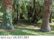 Купить «Зеленый, тропический пальмовый лес», фото № 24931081, снято 22 октября 2015 г. (c) виктор химич / Фотобанк Лори