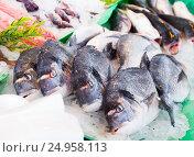 Купить «fresh dorado on market», фото № 24958113, снято 25 октября 2016 г. (c) Яков Филимонов / Фотобанк Лори